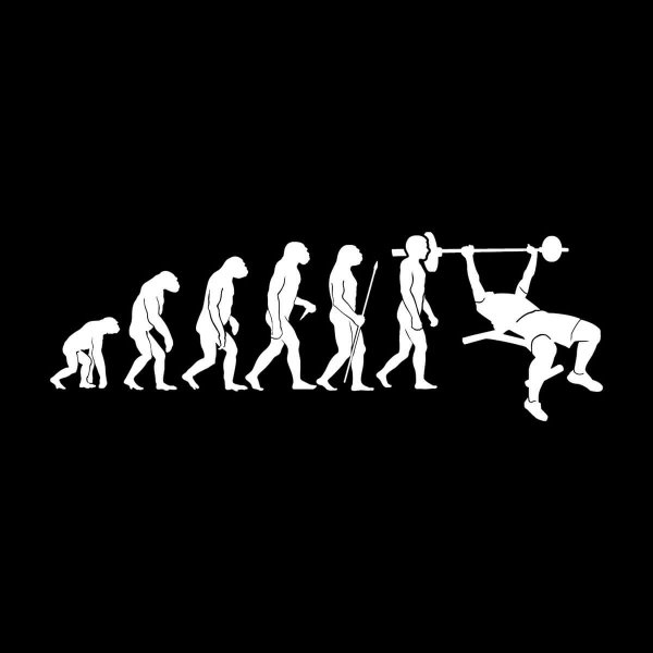 Muay Thai Evolution Aufkleber Sticker 31 x 11 cm
